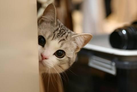 如何训练猫咪躺下站立?